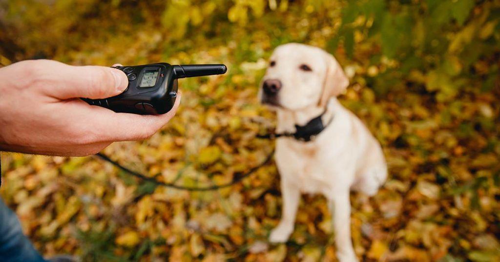 chien à l'écoute