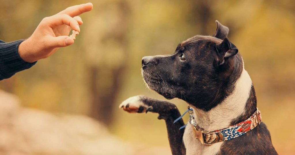 récompenses pour le chien