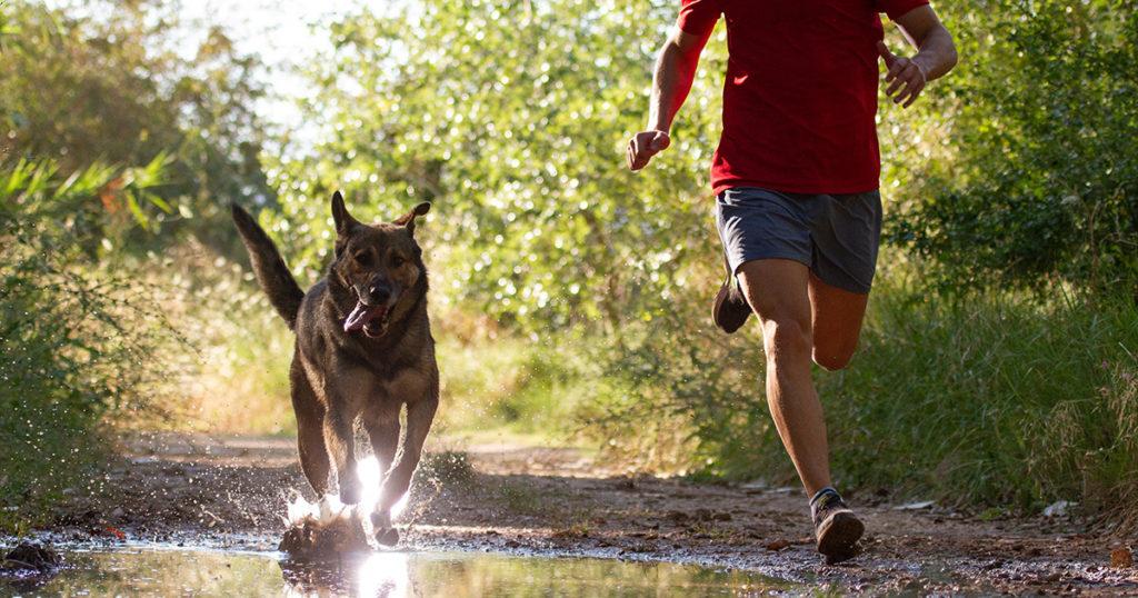 chien qui court en forêt